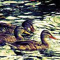 Duck Duck Duck  by Beth Akerman