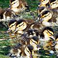 Duck-pile by Don Mann
