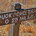 Duck Pond Trail by Bill Owen