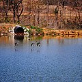 Ducks Flying Over Pond I by Jai Johnson