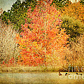 Ducks In An Autumn Pond by Joan McCool