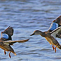 Ducks In Flight by Ira Runyan