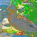 Duckside by Anastasia Pellerin