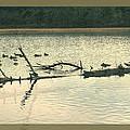 Ducky Of A Spring by Debra     Vatalaro