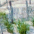 Dune Fences At Cape Hatteras National Seashore by Anne Kitzman