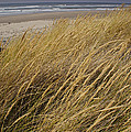 Dune Grass On The Oregon Coast by Mick Anderson
