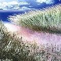 Dune Path by Joseph Gallant