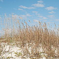 Dune To Sky by Kathy Gibbons