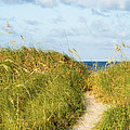 Dune Trail by Dawna Moore Photography