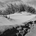Dunes On A Staten Island Beach by Nancy De Flon