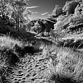 Dunes Path by Bob Nardi