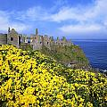 Dunluce Castle, Co. Antrim, Ireland by The Irish Image Collection