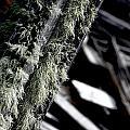 Dunraven Moss by Sean Brubaker