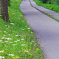 Dutch Bicycle Path - Digital Painting by Carol Groenen