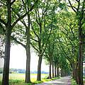 Dutch Country Road by Carol Groenen
