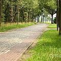 Dutch Road 2 by Carol Groenen