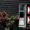 Dutch Window by Lainie Wrightson