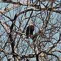 Eagle 1 by Bob Donovan