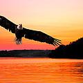 Eagle At Break Of Dawn by Randall Branham
