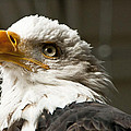 Eagle Eye by Jon Berghoff
