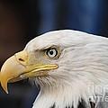 Eagle Head by Dean Gribble