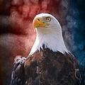 Eagle I by Jai Johnson
