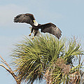 Eagle In The Palm by Deborah Benoit