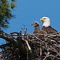 Eagle Nest by Dale J Martin
