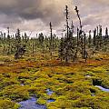 Eagle Plains, Yukon Territory, Canada by Darwin Wiggett