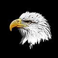 Eagle Profile by Steve McKinzie