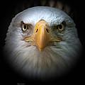 Eagle by Rebecca Samler