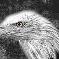 Eagle Two by The Artist Project