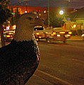 Eagle Watching Grants Pass Night by Mick Anderson