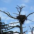Eagles Nest by LeeAnn McLaneGoetz McLaneGoetzStudioLLCcom