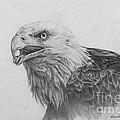 Eagles Quest by Frank Zampardi