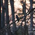 Early Bird by Crissy Sherman