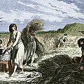 Early Humans Harvesting Crops by Sheila Terry