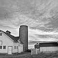 Early Morning On The Farm Bw by James BO  Insogna