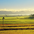 Early Morning Pastoral Scene With Keyline Plowing Near Warwick, Queensland, Australia by Peter Walton Photography