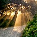 Early Morning Sunlight by Michelle Calkins