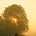 Early Morning Sunshine by Susan Wall
