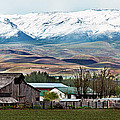 Early Spring by Robert Bales
