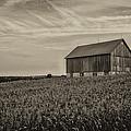 Ears In The Field by CJ Schmit