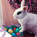 Easter Bunny by Garry Gay