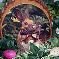 Easter Bunny by Living Color Photography Lorraine Lynch