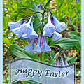 Easter Card - Virginia Bluebells by Mother Nature