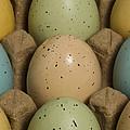 Easter Eggs Carton 1 A by John Brueske