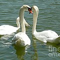 Easter swans