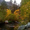 Eastern Sierras by Carolyn Curtice