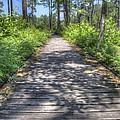 Easy Path by David Troxel